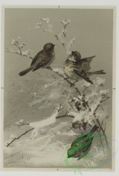 prang_cards_birds-00161 - 0517-Christmas cards depicting birds on tree branches 106379