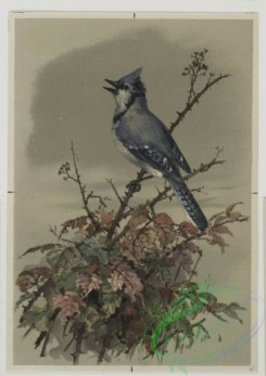 prang_cards_birds-00162 - 0517-Christmas cards depicting birds on tree branches 106380