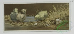 prang_cards_birds-00163 - 0520-Easter cards with chicks and their eggs, landscapes, Christmas cards depicting children and holly 106409