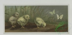 prang_cards_birds-00164 - 0520-Easter cards with chicks and their eggs, landscapes, Christmas cards depicting children and holly 106410