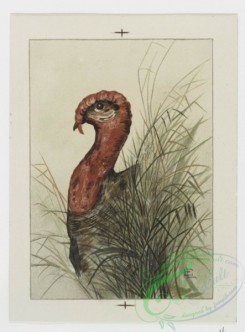 prang_cards_birds-00177 - 0770-Christmas cards depicting roosters, turkeys, and flowers 107630