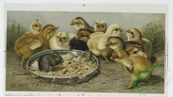 prang_cards_birds-00185 - 1012-The Intruder (depicting mouse in plate of food surrounded by chicks). Thoughts for every day in the year from the writings of John Ruskin (depicting p 100045