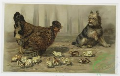 prang_cards_birds-00189 - 1090-Cluck Cluck, Take Care (prints depicting chickens, baby chicks, and dog) 100340