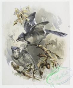 prang_cards_birds-00190 - 1112-Prints entitled 'blue jays' and 'scarlet tanagers.' 100408