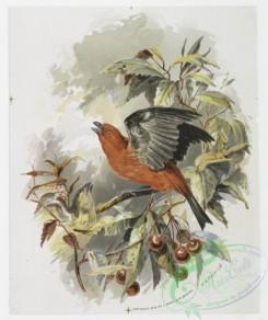 prang_cards_birds-00191 - 1112-Prints entitled 'blue jays' and 'scarlet tanagers.' 100409