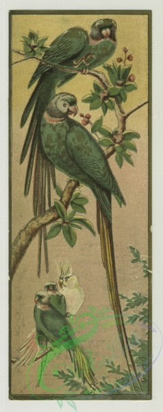 prang_cards_birds-00197 - 1346-Trade cards depicting birds, a nest, an insect, a man carrying a woman across a stream, a bride and groom, verso depicts gloves, fans, dolls and doll 101305