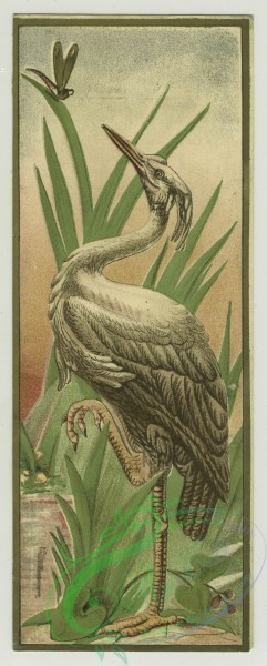 prang_cards_birds-00198 - 1346-Trade cards depicting birds, a nest, an insect, a man carrying a woman across a stream, a bride and groom, verso depicts gloves, fans, dolls and doll 101306