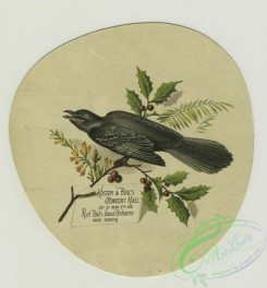 prang_cards_birds-00201 - 1390-(A trade card depicting a bird, flowers and holly.) 101559