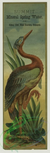 prang_cards_birds-00205 - 1400-Trade cards depicting tropical birds with long legs 101625