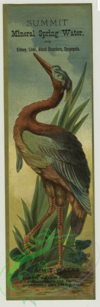 prang_cards_birds-00206 - 1400-Trade cards depicting tropical birds with long legs 101626