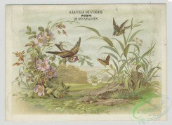 prang_cards_birds-00207 - 1415-Trade cards depicting a field, flowers, birds, a butterfly and men making wine 101703