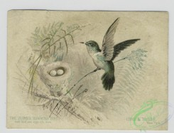 prang_cards_birds-00213 - 1548-Trade cards depicting the vervain humming bird's nest and eggs, a girl looking at a mask resting on an easel, a boy singing to the moon and a woman's 102302