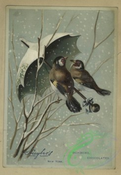 prang_cards_birds-00215 - 1594-Trade cards depicting flowers, butterflies, birds, snow and umbrellas 102531