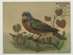 prang_cards_birds-00233 - 1738-Trade cards depicting birds perched on tree limbs 103396
