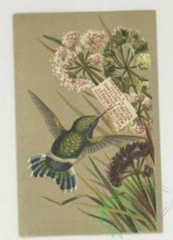 prang_cards_birds-00234 - 1752-Trade cards depicting hummingbirds, flowers, children, ice and an umbrella, cigarette cards entitled 'between the acts & bravo' of Emma Celia Thursby 103475