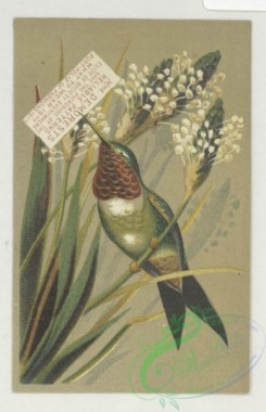 prang_cards_birds-00235 - 1752-Trade cards depicting hummingbirds, flowers, children, ice and an umbrella, cigarette cards entitled 'between the acts & bravo' of Emma Celia Thursby 103476