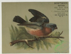 prang_cards_birds-00241 - 1785-Trade cards depicting birds, a nest and berries 103675