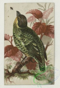 prang_cards_birds-00243 - 1787-Trade cards depicting a bird, eggs, nests, insects, flowers, frogs, the moon and a scenic view 103683
