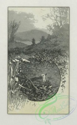 prang_cards_black-and-white-00731 - 1783-Trade cards depicting birds, trees, rivers, acrobats, musical instruments, a woman painting, a man with a parasol, and a boy riding a pseudo horse 103670