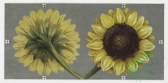 prang_cards_botanicals-00007 - 0149-Birthday cards with decorative borders, depicting flowers and a bird 102098