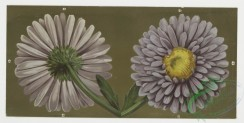 prang_cards_botanicals-00009 - 0151-Birthday cards with decorative borders, depicting flowers, lily pads, clovers and the harvest 102192