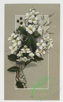prang_cards_botanicals-00010 - 0154-Easter cards depicting flowers 102312