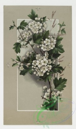 prang_cards_botanicals-00011 - 0154-Easter cards depicting flowers 102313