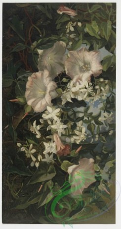 prang_cards_botanicals-00015 - 0186-Prints depicting flowers and plants 103886