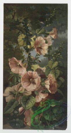 prang_cards_botanicals-00016 - 0186-Prints depicting flowers and plants 103887