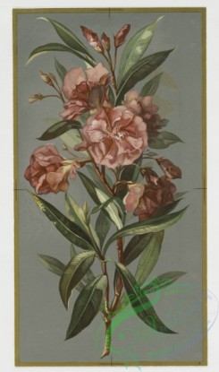 prang_cards_botanicals-00022 - 0357-Christmas and New Year cards depicting flowers, including yellow roses and oleanders 105247