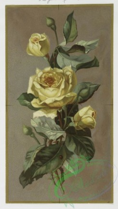 prang_cards_botanicals-00023 - 0357-Christmas and New Year cards depicting flowers, including yellow roses and oleanders 105248
