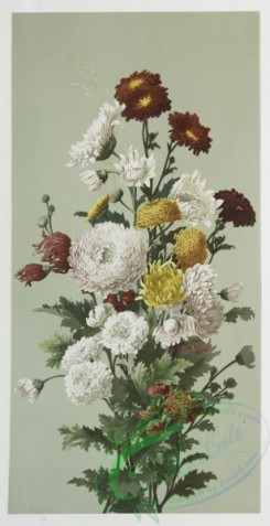 prang_cards_botanicals-00026 - 0400-Prints depicting flowers 105545