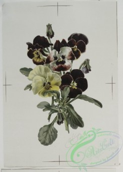 prang_cards_botanicals-00033 - 0486-Flowers 106158