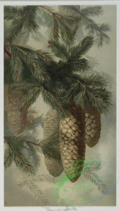 prang_cards_botanicals-00040 - 0496-Hickory, Norway Spruce, Chestnut, Red Cedar, and Pitch Pine 106249
