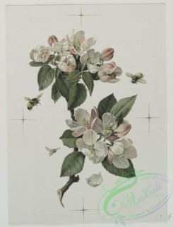 prang_cards_botanicals-00052 - 0504-Flower designs 106320