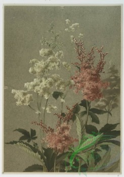 prang_cards_botanicals-00068 - 0552-Prints of flowers entitled 'Magnolia,' 'Spiraea,' 'Trillium' and 'Thistle and Grasses.' 106604