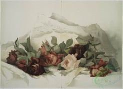 prang_cards_botanicals-00072 - 0558-Red and Pink Roses (roses with mountain range in background) 106626