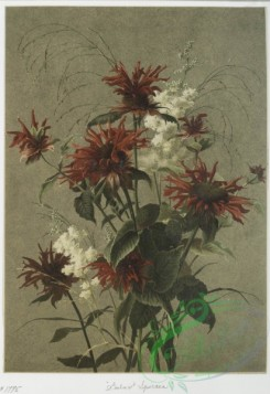 prang_cards_botanicals-00082 - 0592-Two prints entitled 'Cardinal flowers' and 'Balm and spiraea.' 106856
