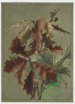 prang_cards_botanicals-00085 - 0596-Autumn leaves 1 106865