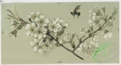 prang_cards_botanicals-00097 - 0647-Birthday, Christmas and Easter cards depicting the ocean, sailboats, bees, decorative design and flowers, including-cherry blossoms and apple bloss 107103