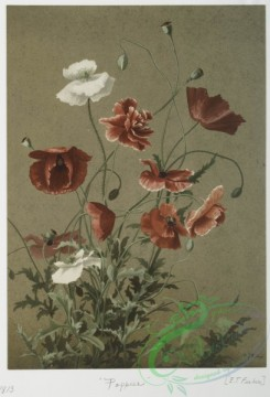 prang_cards_botanicals-00100 - 0648-Two prints entitled 'Japan lily' and 'Poppies.' 107109