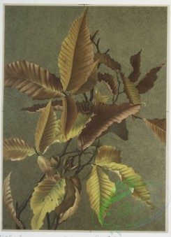 prang_cards_botanicals-00101 - 0650-Two prints entitled 'Autumn leaves 3' and 'Autumn ferns.' 107118