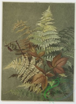 prang_cards_botanicals-00102 - 0650-Two prints entitled 'Autumn leaves 3' and 'Autumn ferns.' 107119