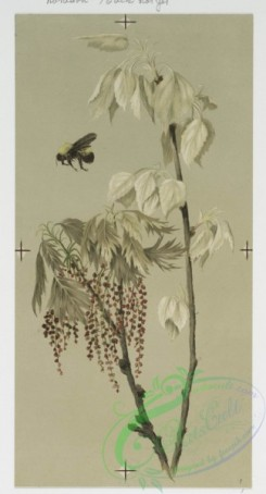 prang_cards_botanicals-00104 - 0660-Birthday and Easter cards depicting flowers, bees and budding trees 107175