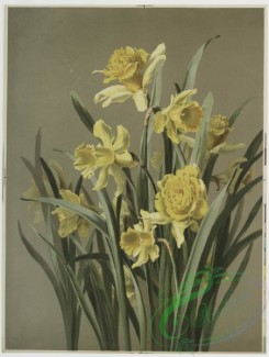 prang_cards_botanicals-00109 - 0662-Two prints entitled, 'Daffodils' and 'Daisies.' 107184