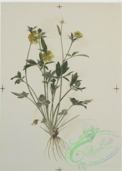 prang_cards_botanicals-00119 - 0688-Prints depicting drawings and sketches of plants, flowers, and insects 107279