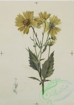 prang_cards_botanicals-00120 - 0688-Prints depicting drawings and sketches of plants, flowers, and insects 107280