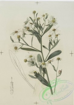 prang_cards_botanicals-00124 - 0690-Prints depicting drawings and sketches of plants and flowers 107294