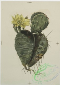 prang_cards_botanicals-00125 - 0690-Prints depicting drawings and sketches of plants and flowers 107295