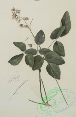 prang_cards_botanicals-00127 - 0691-Prints depicting drawings and sketches of plants and flowers 107300